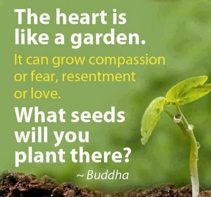 88840-buddha-quotes-about-plants